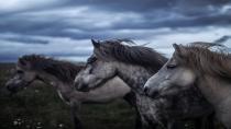 Dörtyol Belediye Başkanı Keskin'den kayıp 99 atla ilgili açıklama: Atlar sucuk yapılmadı