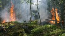 İtalya da yanıyor: Sicilya Adası'nda orman yangını
